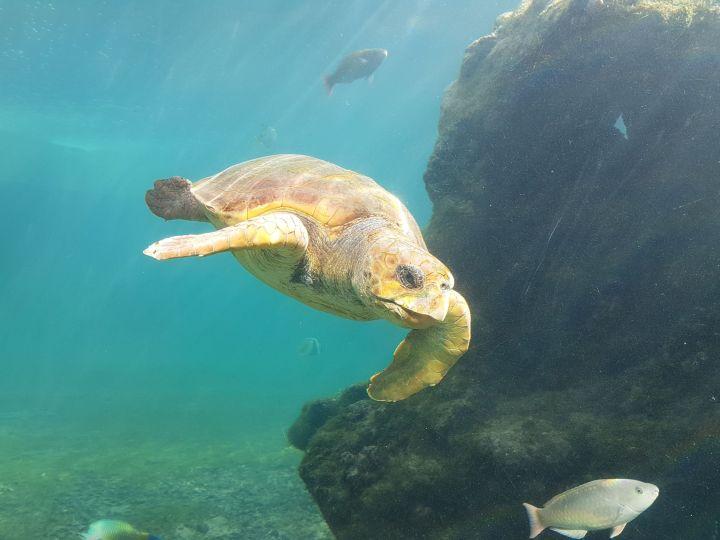 Kélonia : visite du centre de recherche et de soins des tortues marines – Saint Leu