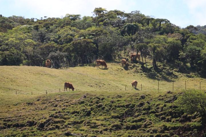 Découvrir la Plaine des Cafres pendant l'hiver austral