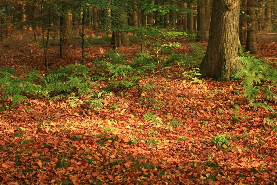sol d'une forêt