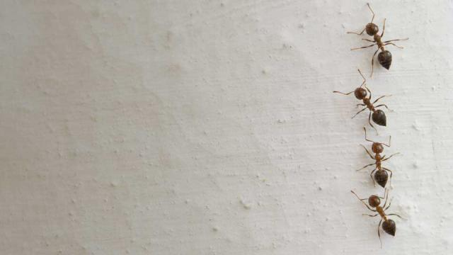 3 insectes indesirables qui vivent peut
