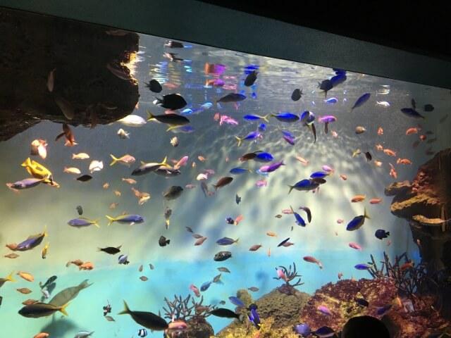 宮島水族館 お土産 キーホルダー