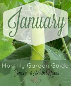 Monthly Garden Guide January Pinterest