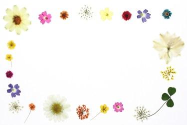 押し花の作り方!子供でも簡単・電子レンジやアイロンで作る方法