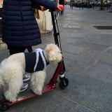 paris dog on scooter
