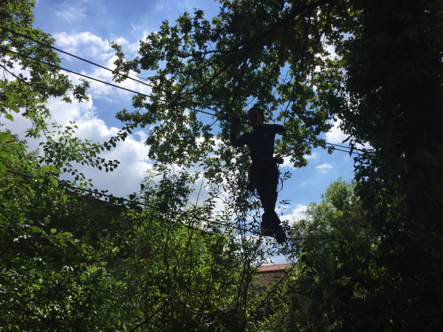 Tree Climbing in Paris
