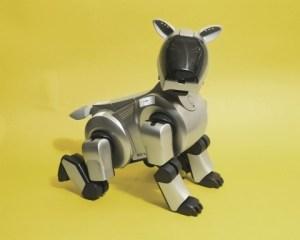 BredaPhoto Kids Week hond