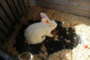 Er zijn ook echte dieren in de ark, zoals dit konijn