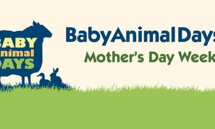 Baby Animal Days 2016 {Giveaway}