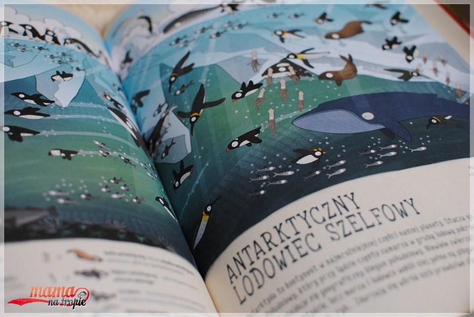 śnieżna sowa, książka dla przyrodników, dla małych odkrywców, książka dla dzieci, nasza księgarnia