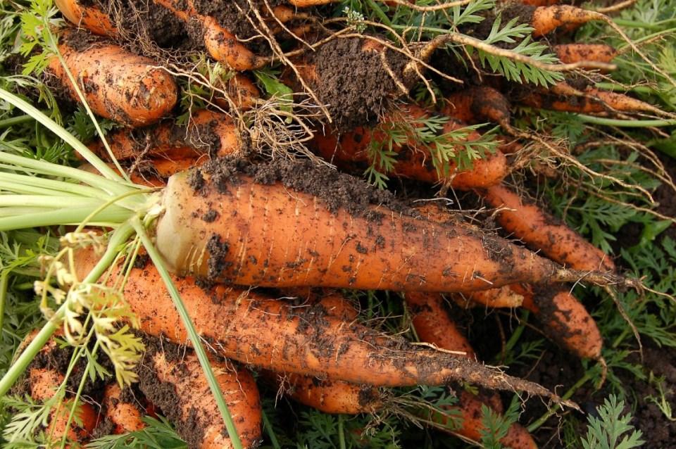 zdrowe jedzenie, warzywa, marchweki, od rolnika, ekologiczne jedzenie