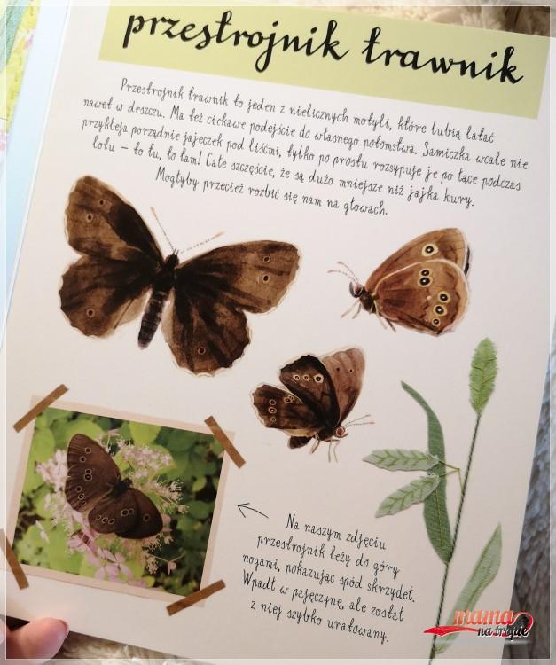 mały atlas motyli, ewa i paweł Pawlak, nasza księgarnia, książka dla dzieci