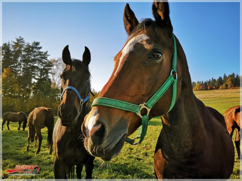 konie, zwierzęta, folwark, stajnia