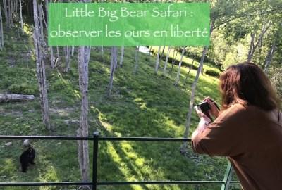 little big bear safari : observer les ours en liberté