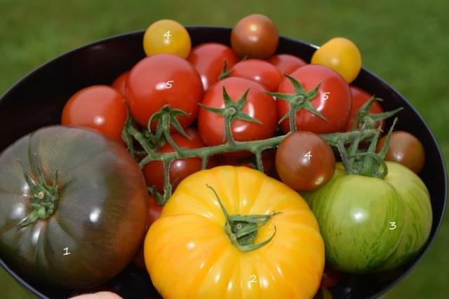 Ma Corbeille de Tomates - Prince de Bretagne
