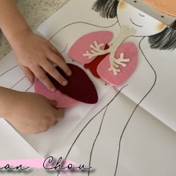 mon coffret montessori le corps humain (11)
