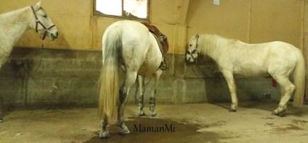 semaine-maman-un peu de mamanmi-mamanmi-blog-mars 2018 2