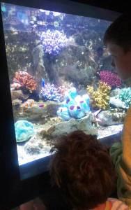 guideez aquarium de vannes