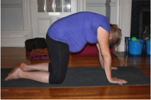 cat pose prenatal yoga