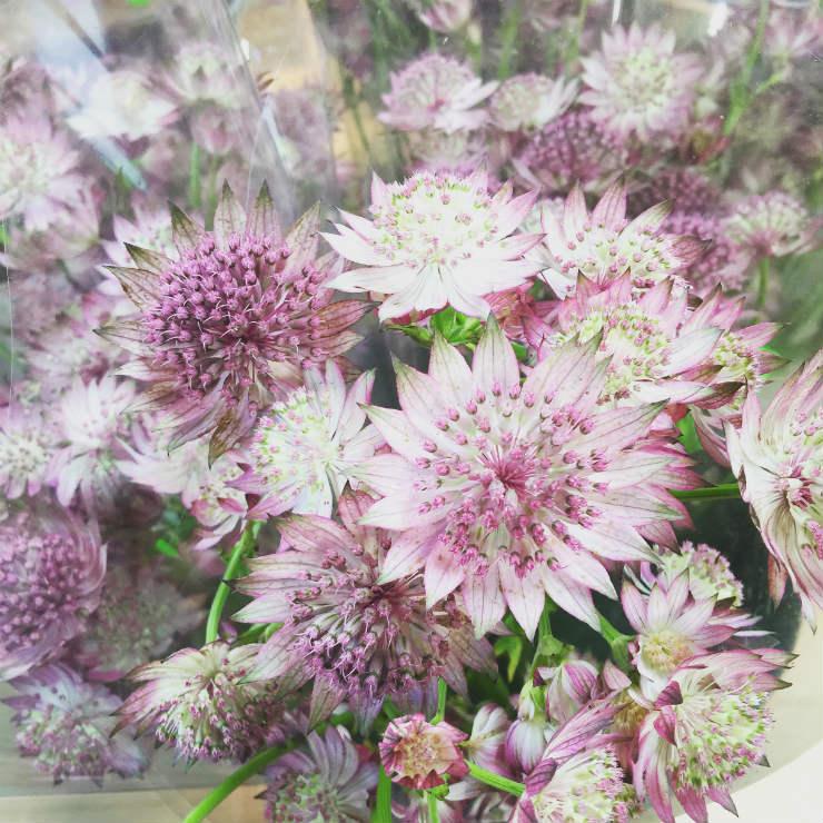 farmflowers3-via-mamanushkablog