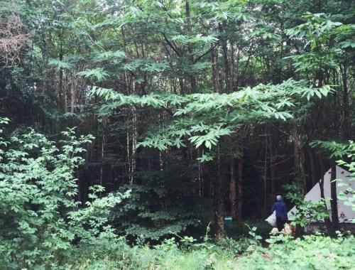 Mamanuhka.com || Gone Camping || Forest Tents