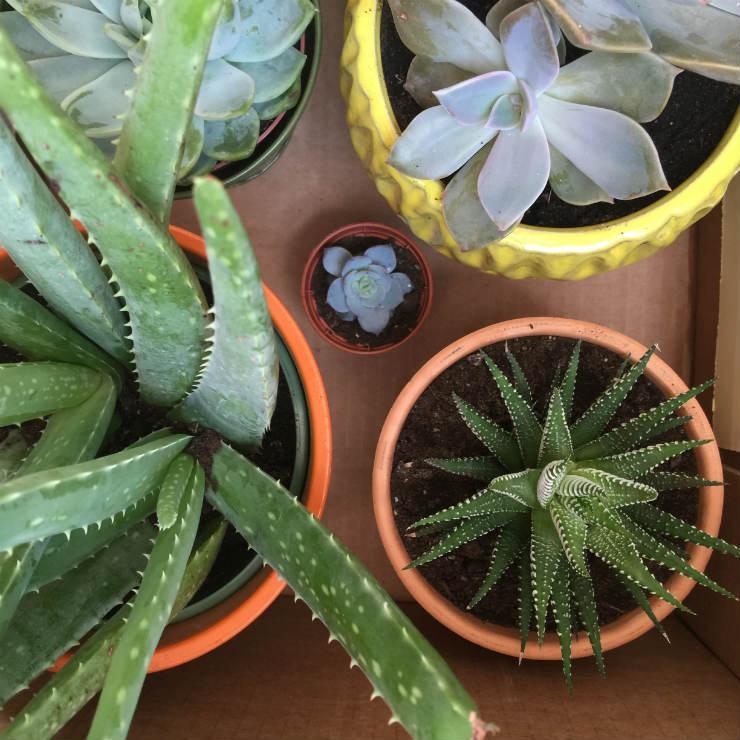 succulents-house-plants-via-mamanushka-blog