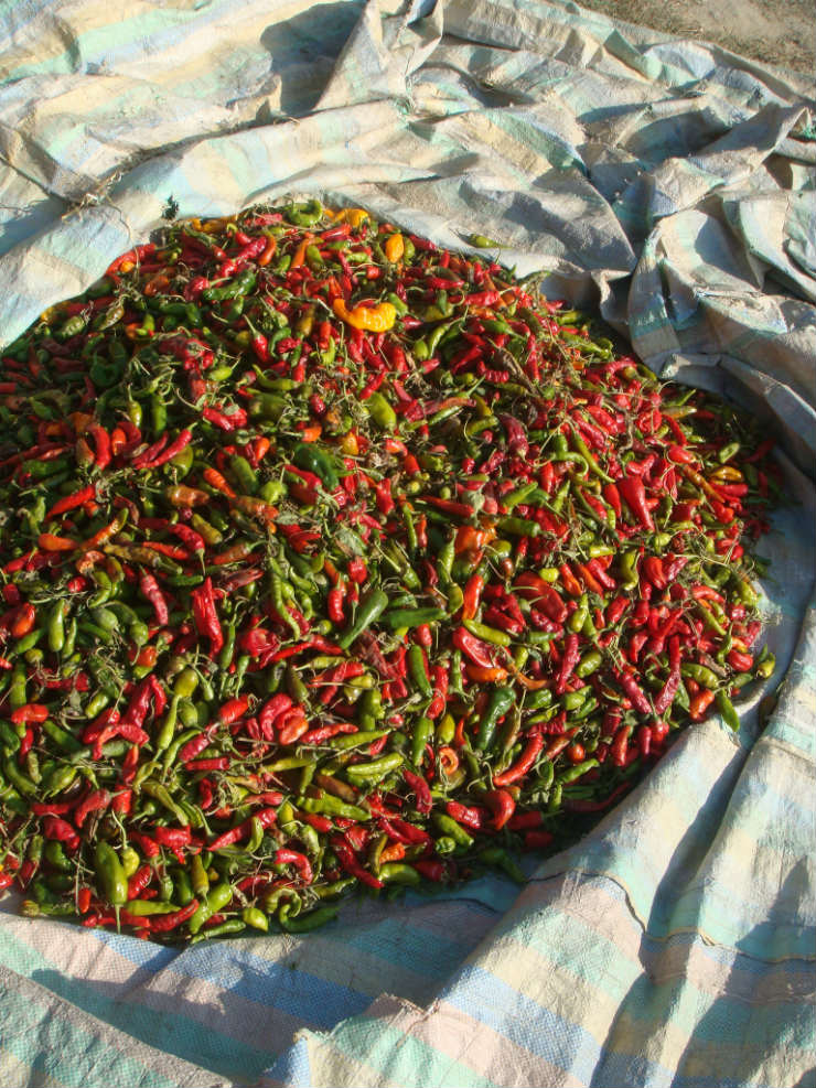 kashmiri-yakhn-chillies-via-mamanushka-blog