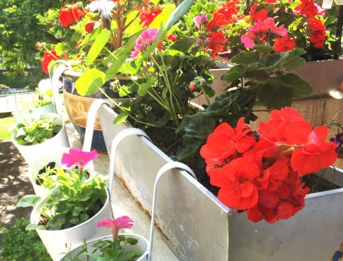 MAMANUSHKA.com || Foolproof Guide to Growing an Absolutely Glorious Container Garden || Easy Plants For Beginners || Urban Garden