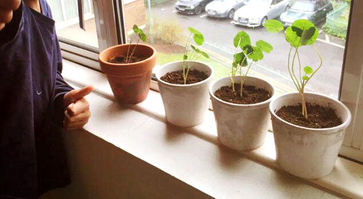 MAMANUSHKA.com    From Plant Killer to Glorious Garden Addict    Easy Plants For Beginners    Urban Garden    Nasturtium Seedlings