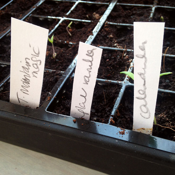 MAMANUSHKA.com    How To Plant An Edible Garden    Easy Guide to Growing Your Own Fruit & Vegetables    Growing Seedlings