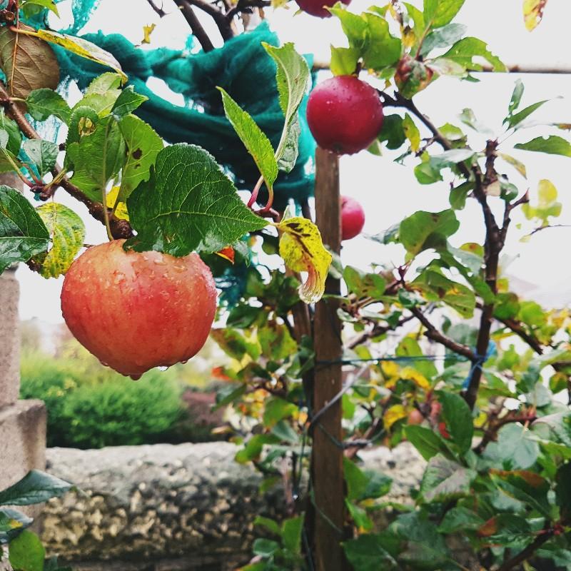 MAMANUSHKA.com    Best Apple Cake Recipe    No Mixer    Quick    Easy    Delicious    Apple Tree