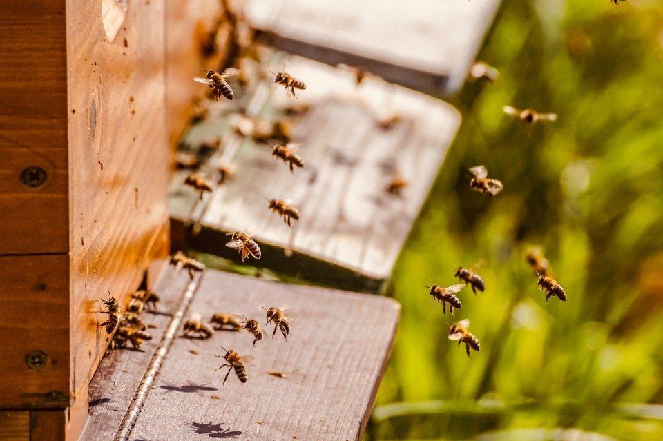 idée de cadeau éco-responsable, le parrainage d'une ruche pour sauver les abeilles et les apiculteurs