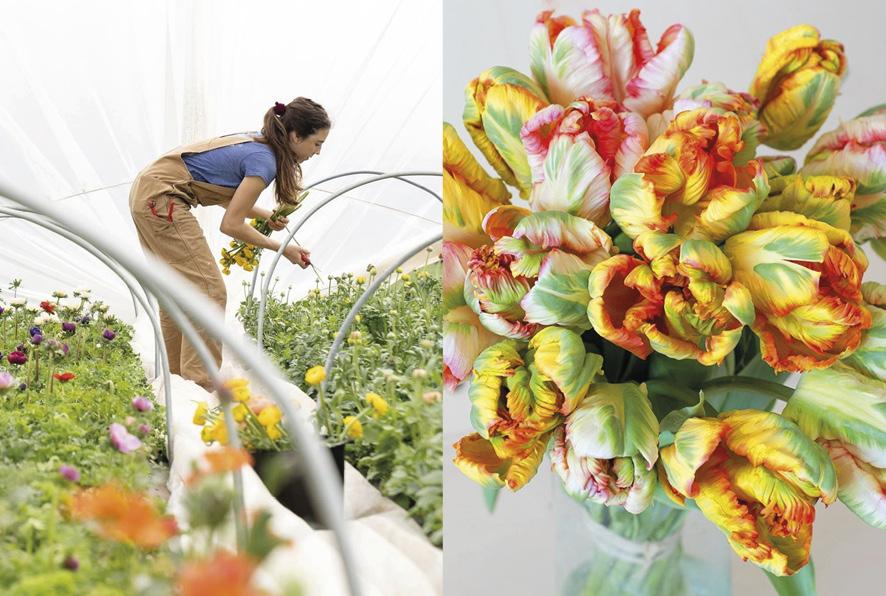fleuriste éco-responsable fleurs de saison 100% française et locales