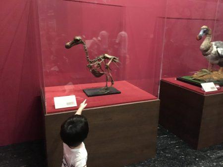 絶滅動物研究所