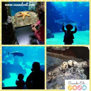 Visitar el Acuario con Niños Pequeños
