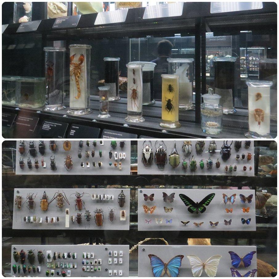 museublau02