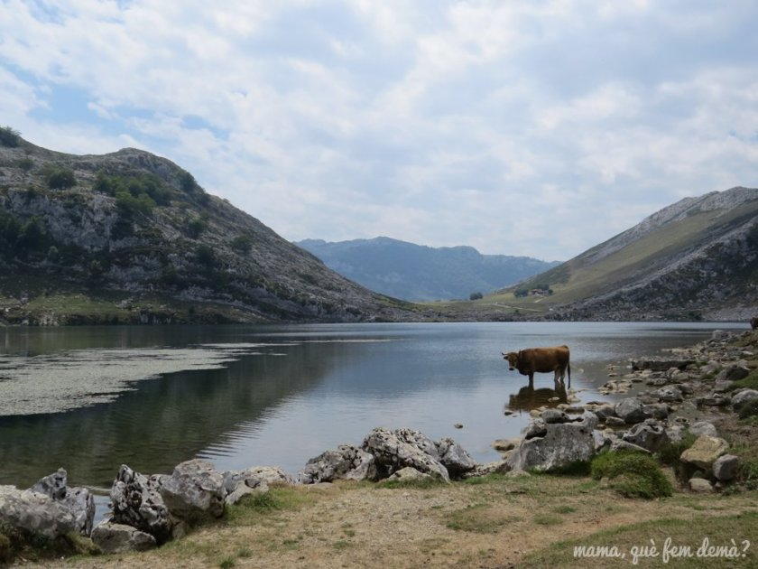 Excursión por los lagos de Covadonga