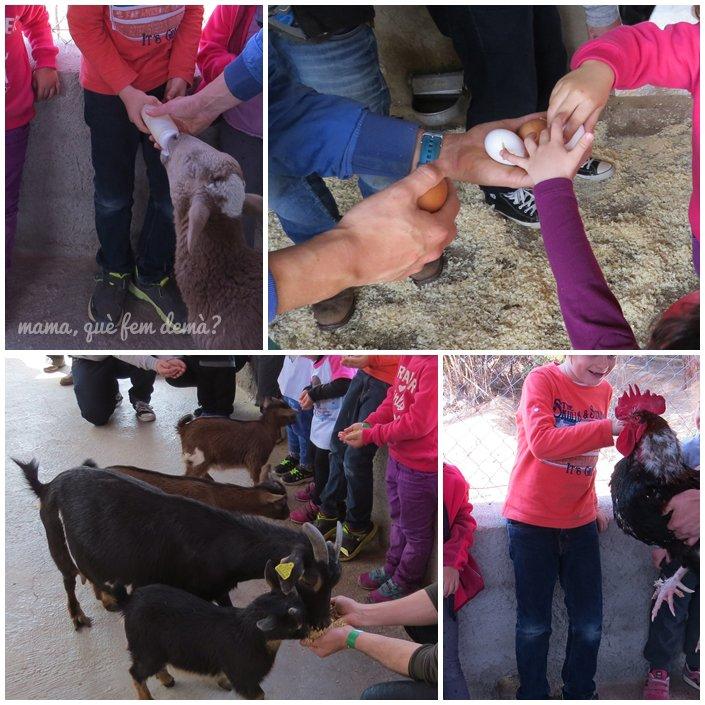 Niños tocando gallinas, cabras y ovejas en la Granja Can Pidelaserra
