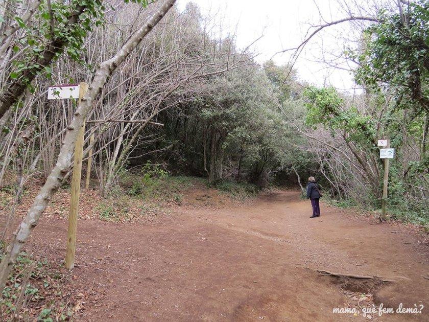 Bosque y postes señalizando la ruta el Croscat