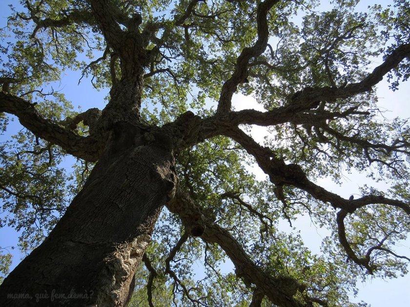 Suro Xato en la excursión del gegants del bosc i la cova d'en Daina