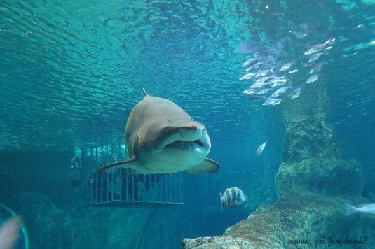 aquarium_costa_almeria03