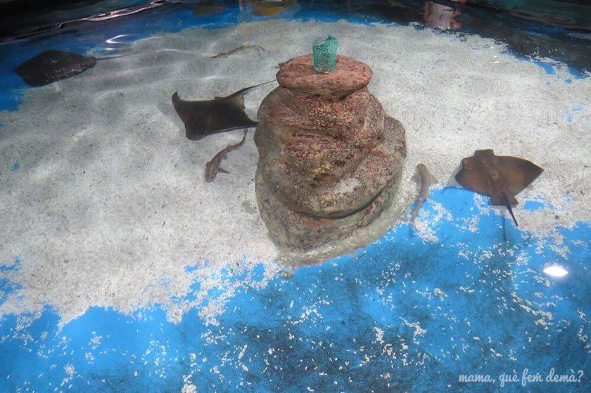 aquarium_costa_almeria05