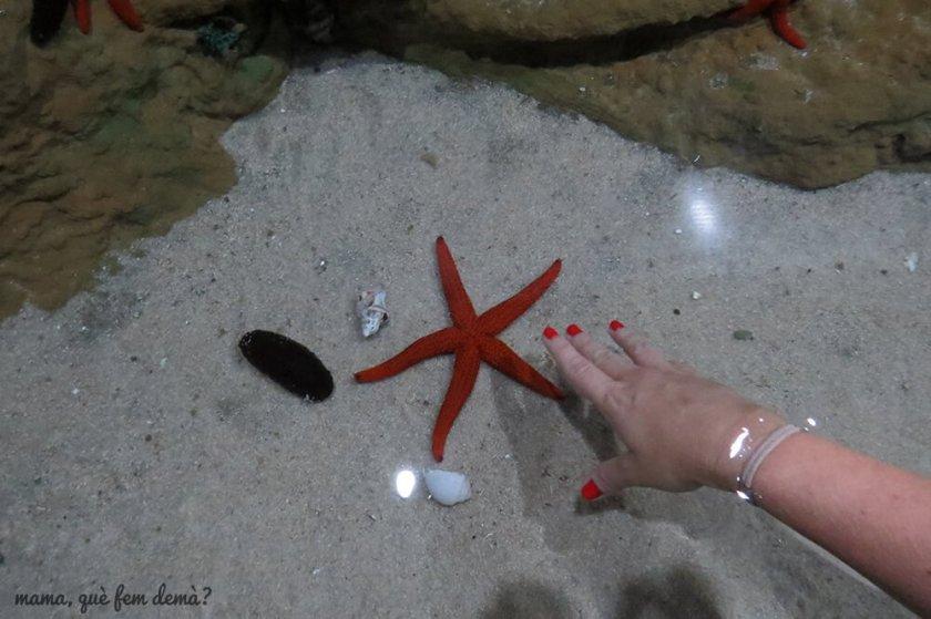 aquarium_costa_almeria07