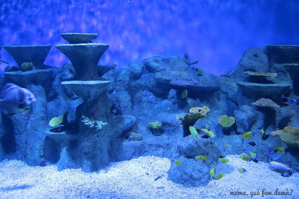 aquarium_costa_almeria10