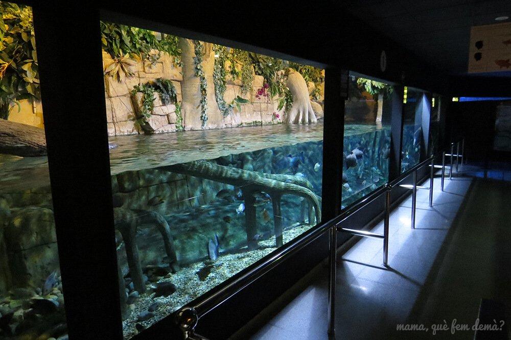 aquarium_costa_almeria13