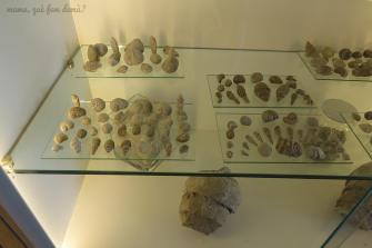 Exposición de fósiles.