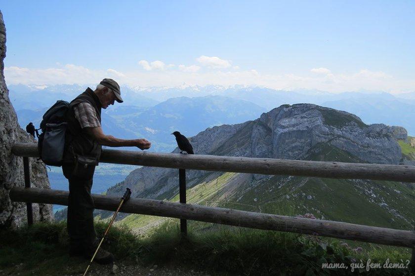 Excursionista de edad avanzada dando de comer a un cuervo en la ruta de las flores del pilatus