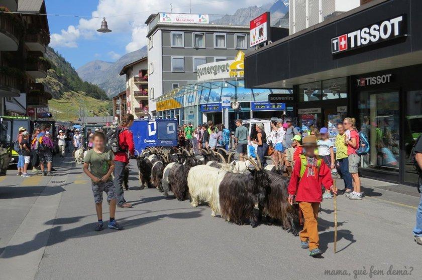 Cabras en Zermatt