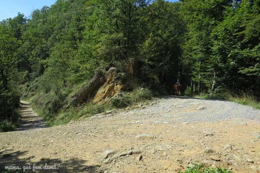 Bifurcación de caminos