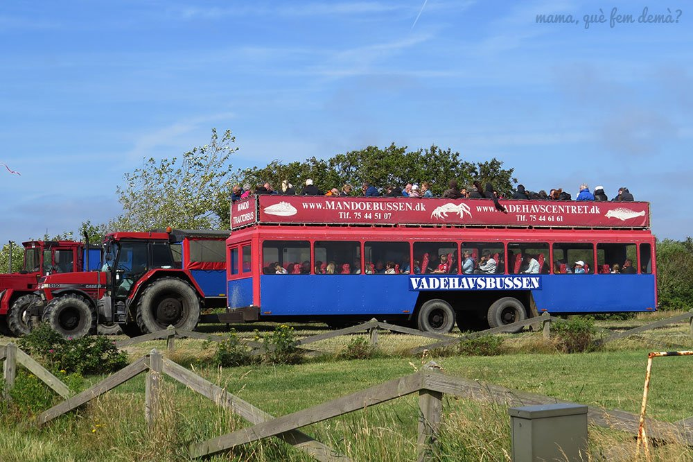 Tractorbus rojo y azul