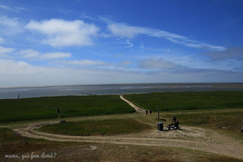 Camino en Mando por donde va el tractor hasta el banco de arena donde están las focas